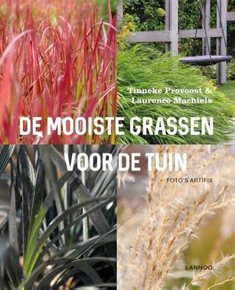 Afbeeldingen van De mooiste grassen voor de tuin