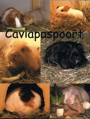 Afbeeldingen van Caviapaspoort